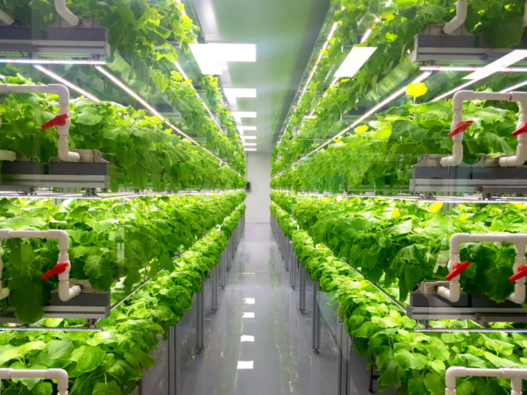 vertical farming shutter stock