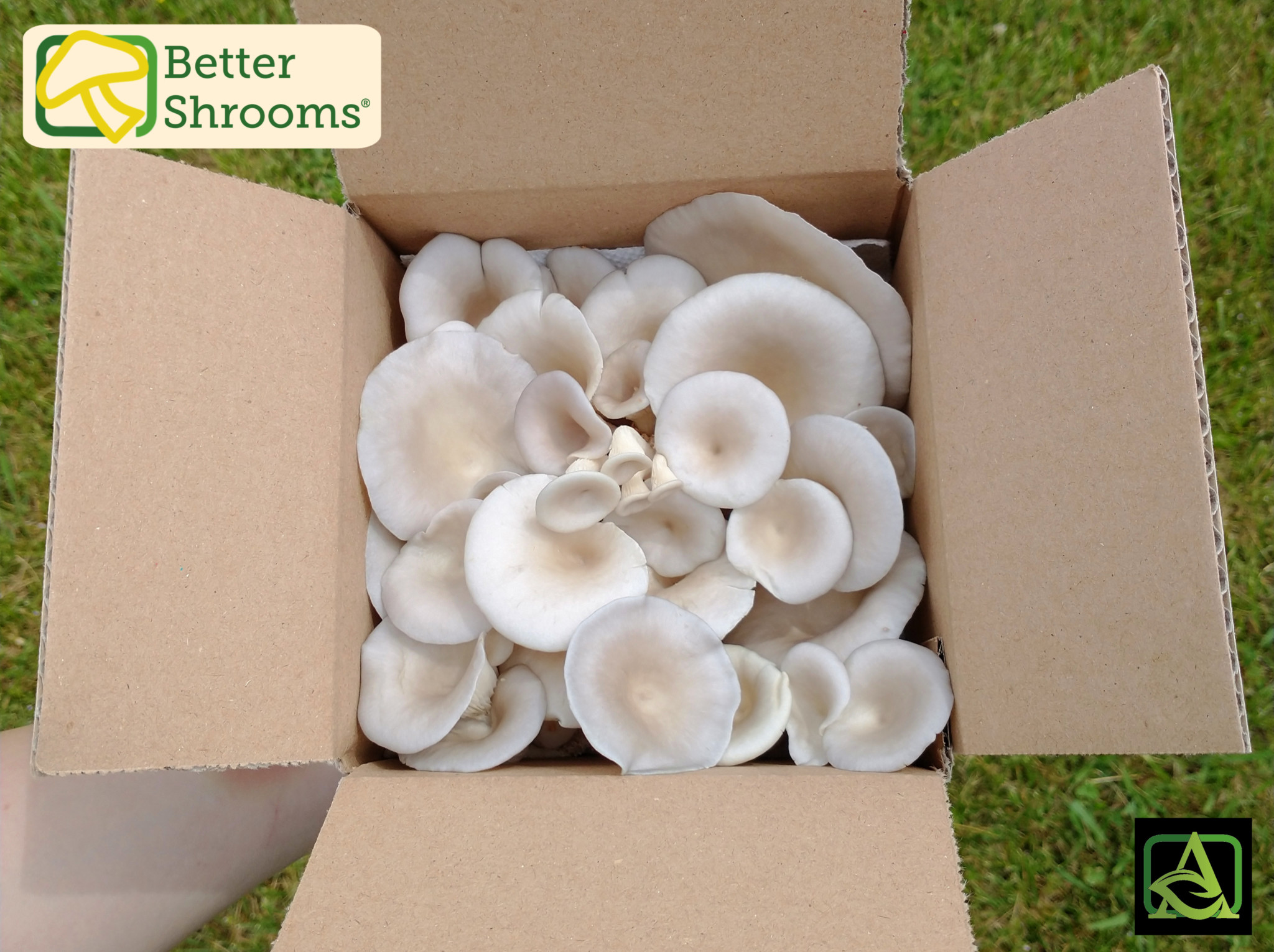 better shrooms